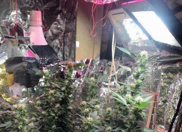 marihuana 03